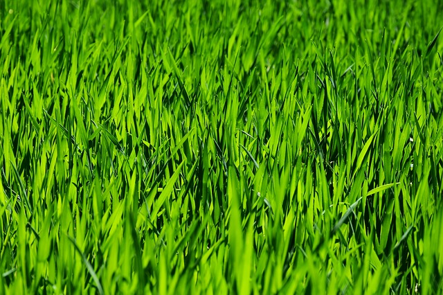 How to get rid of those ugly brown spots in your grass